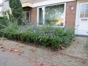 Functioneel en bloemrijk bij rijtjeshuiste Nunspeet 1e jaar (3)