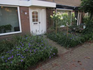 Functioneel en bloemrijk bij rijtjeshuiste Nunspeet 1e jaar (4)